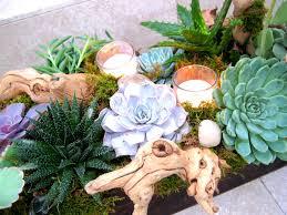 wonderful decoration ideas using succulents gardening forums