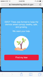 washington d c launches tree watering app the stormwater report