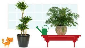 breathtaking cat friendly indoor plants contemporary best
