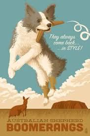 l australian shepherd australian shepherds posters at allposters com