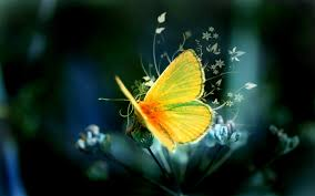34 high quality butterfly backgrounds backgrounds design
