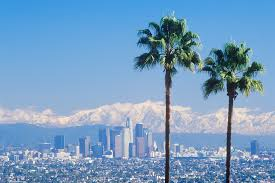la s palm trees are dying and they won t be replaced new york post