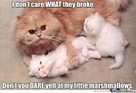 Cute Kittens Meme - those cute little kittens woudln t break anything by