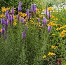 10 Best Perennials And Flowers by 163 Best Purple Perennials Images On Pinterest Flower Gardening