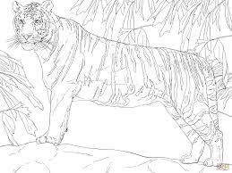 standing bengal tiger coloring page free printable coloring pages