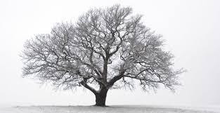 totalitarian trees beachcombing s history