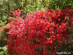 native nz plants eden garden flowers auckland new zealand travel to eat