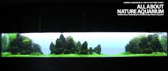 Amano Aquascaping Just Got A Crazy Idea Iwagumi Aquascape In A Massive Tank With