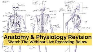 anatomy and physiology final exam study guide notes anatomy and