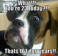 Birthday Meme Dog - elegant happy birthday meme dog happy birthday dog meme kayak