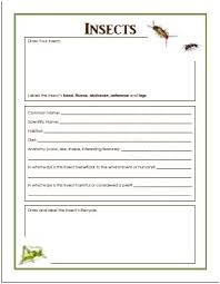 benefits of insects and free insect worksheet the homeschool