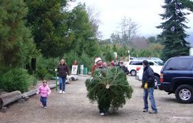 california christmas tree farmer u002790 percent of what i planted