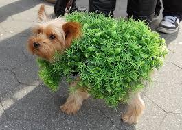 Halloween Costume Dog Funniest Halloween Costumes Pets