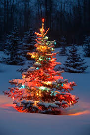 How To Decorate Outdoor Trees With Lights - impressive ideas christmas trees with lights lighted multicolor