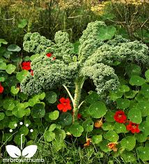 Fall Vegetable Garden Ideas by 38 Best Kale Images On Pinterest Recipes Garden Ideas And