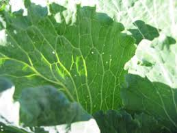 gardening blog