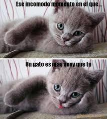 Gato Meme - un gato m磧s sexy que tu pikamiau