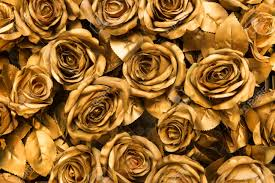 gold roses golden fabric roses background stock photo picture and royalty