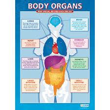 Online Human Body Buy A1 Sized Human Body Poster Set Tts