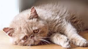Sad Cat Memes - sad cat diary youtube