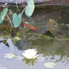 pond u2013 todd u0027s backyard