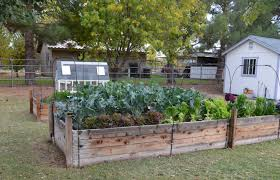 home vegetable garden pictures decorating clear