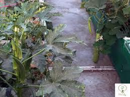 balcony and rooftop vegetable farming u2013 best balcony design ideas