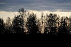 black trees at dusk stock photo colourbox