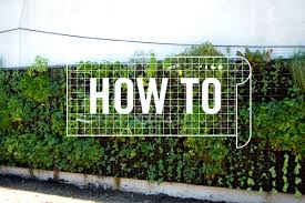 how to grow an edible vertical garden in 5 steps nonprofitpeople