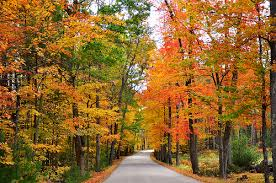 why do tree leaves change color deeproot