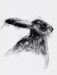 one of my sketch a day drawings hare we go drawing hare http