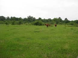 east texas real estate homes farms east texas land ranches