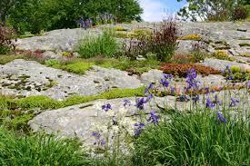 carolyn u0027s big rock garden in massachusetts fine gardening
