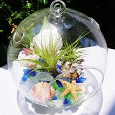 shop large glass terrarium on wanelo