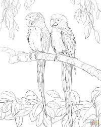 two scarlet macaws coloring page free printable coloring pages