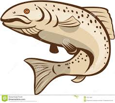 rainbow trout jumping cartoon stock vector image 42014981