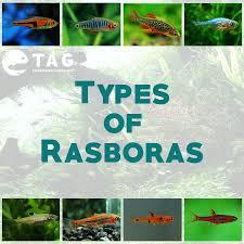 34 best aquarium care guide tag images on pinterest aquariums