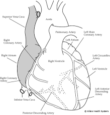 Diagram Heart Anatomy How A Healthy Heart Looks Helping Your Heart