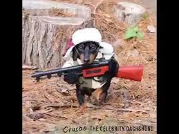 Wiener Dog Meme - funny hunting dog dachshund youtube