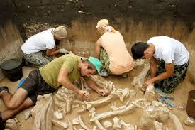 mystery prehistoric woolly mammoth graveyard discovered