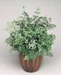 houseplant plant britannica com