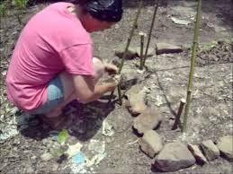 Make Your Own Cucumber Trellis Diy How To Build A Bamboo Cucumber Garden Trellis Youtube