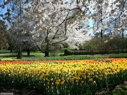 immagini di giardini fioriti foto giardini per sfondi settemuse it