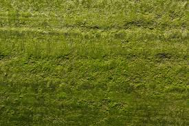 Moss Cleaner For Patios Home Remedy To Kill Moss On Pavement Quickly Home Guides Sf Gate