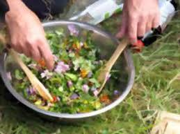 la cuisine des plantes sauvages landes nature environnement plante fleur atelier la