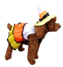 dog clothes for halloween amazon com anit accessories candy corn dog costume 16 inch