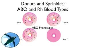blood blood types abo and rh with donuts and sprinkles youtube