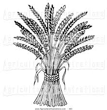 wheat clipart agriculture pencil and in color wheat clipart