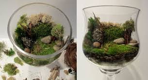 download making a moss terrarium solidaria garden