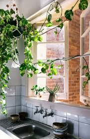 indoor trailing plants in kitchen with open windows country